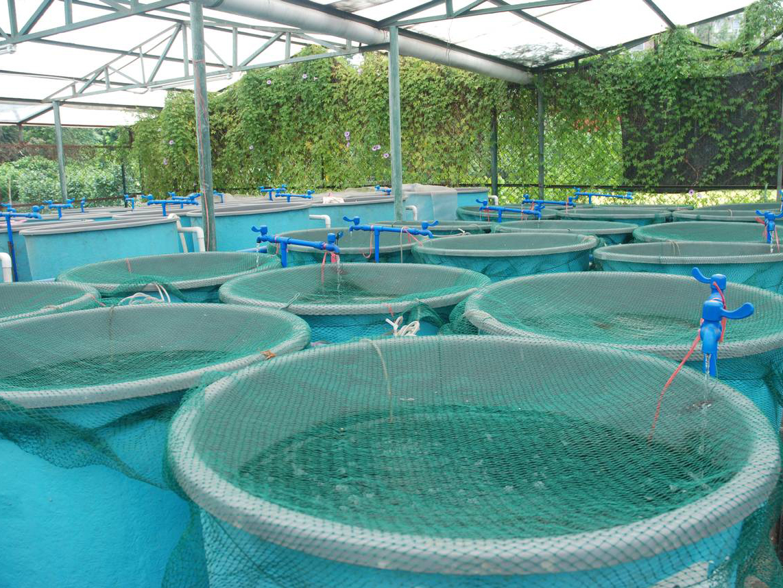 Chlorine dioxide for fish basins.